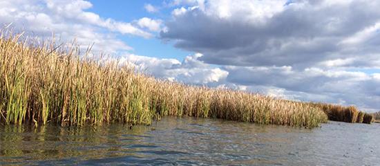 Érdekességek a Tisza-tóról